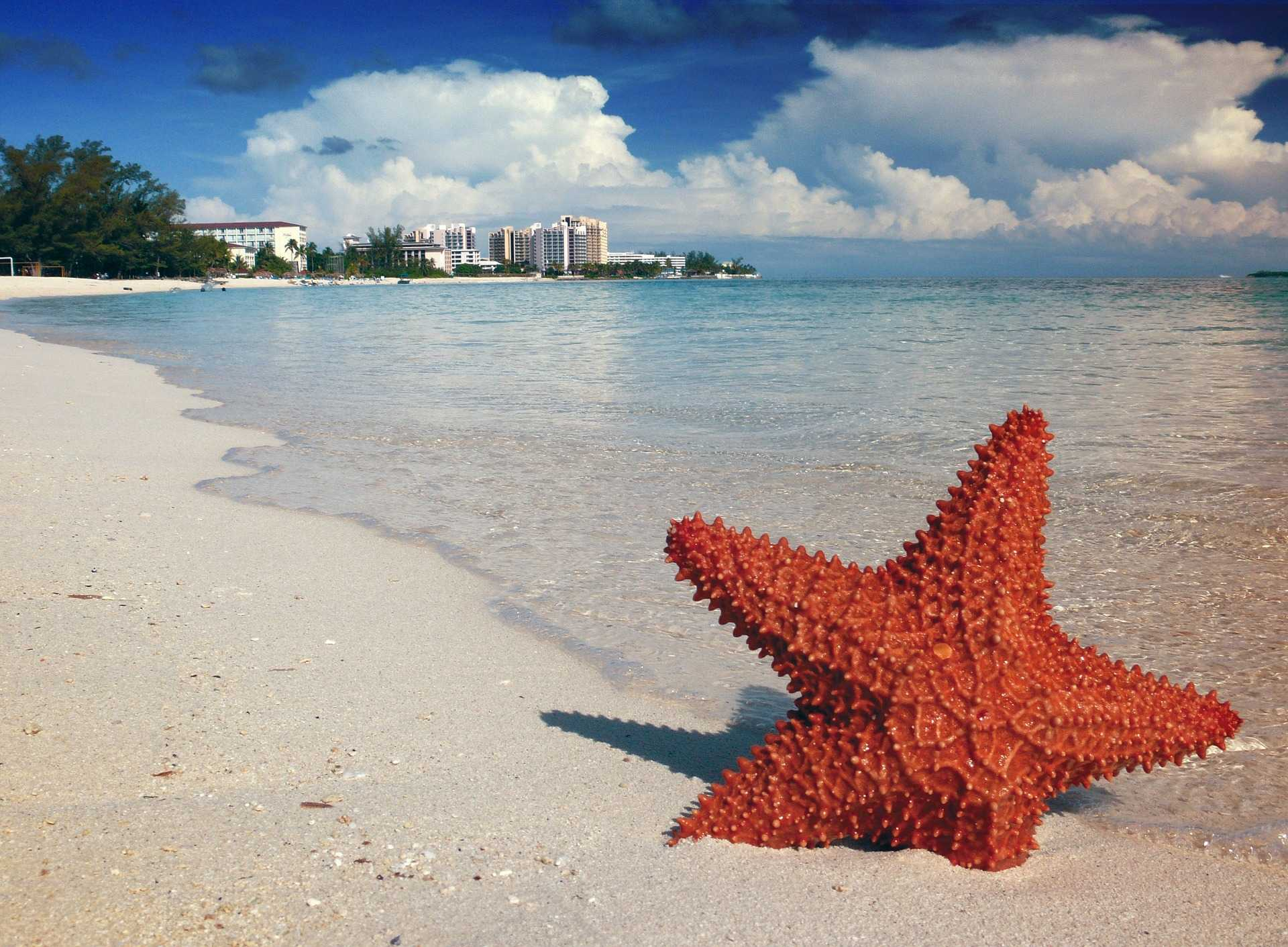 original_starfish-1122849_1920